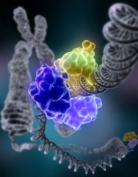 467px-DNA_Repair