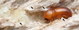 Image credit: doi: 10.1371/journal.pone.0137689. Arrows point to fungi.