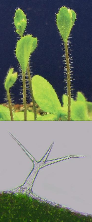 Image credit: doi:10.1371/journal.pbio.1002033.g001