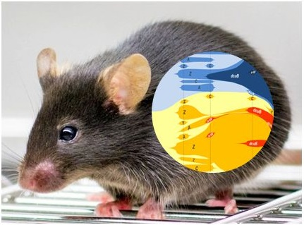 Evolution of Newly Generated Haplotypes inside the Mouse Gut