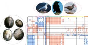 Matrix structure of complete Tatoosh network, organized by groups. Credit: Sander et al.