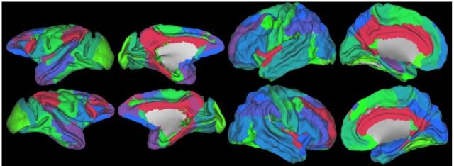 Image credit: Goulas, A. et al., (2014). PLOS Comput. Biol. DOI: 10.1371/journal.pcbi.1003529